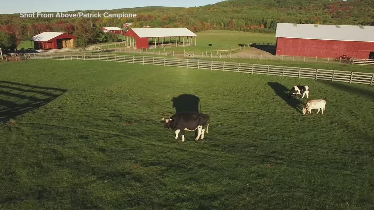 How a New York farm helped the vegan movement