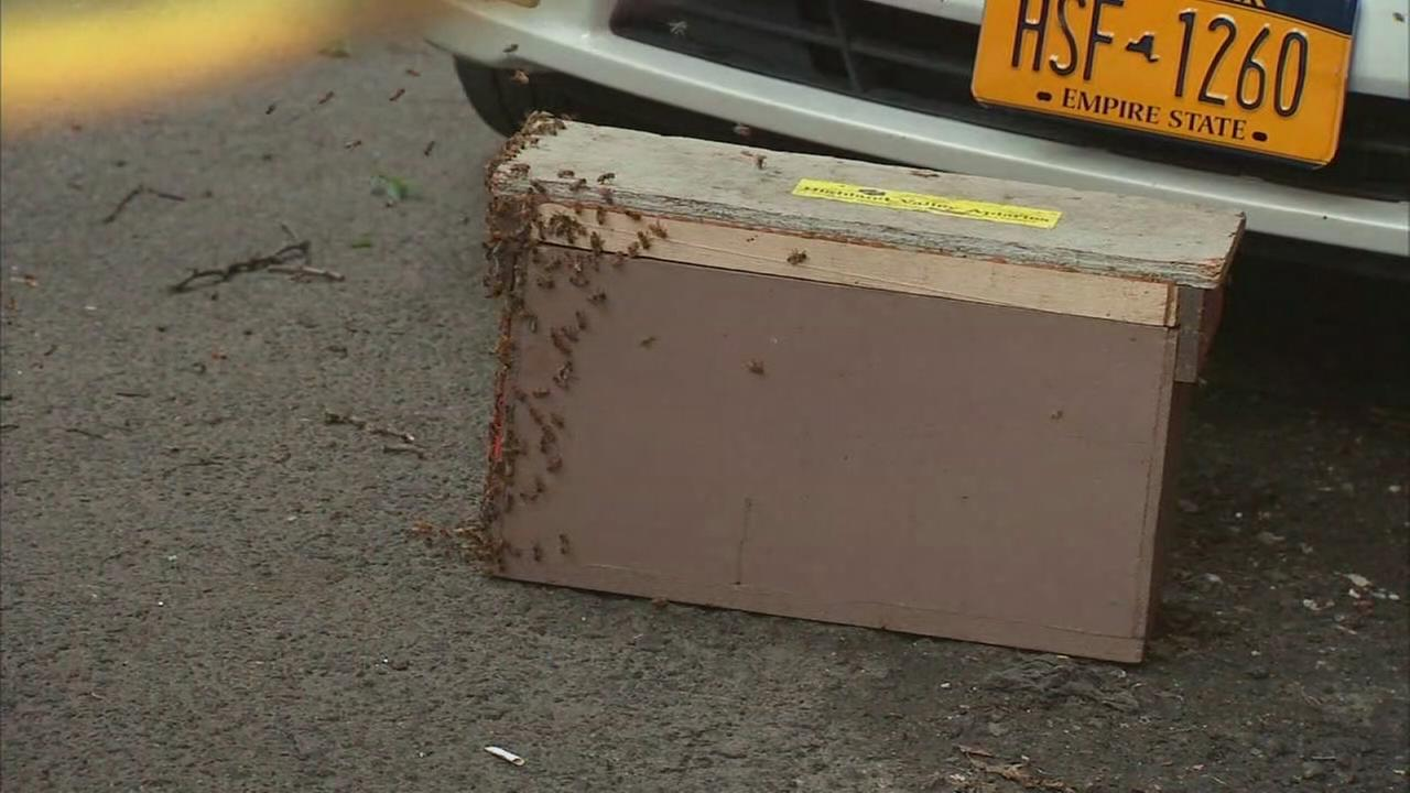 Swarm of bees invades Greenwich Village
