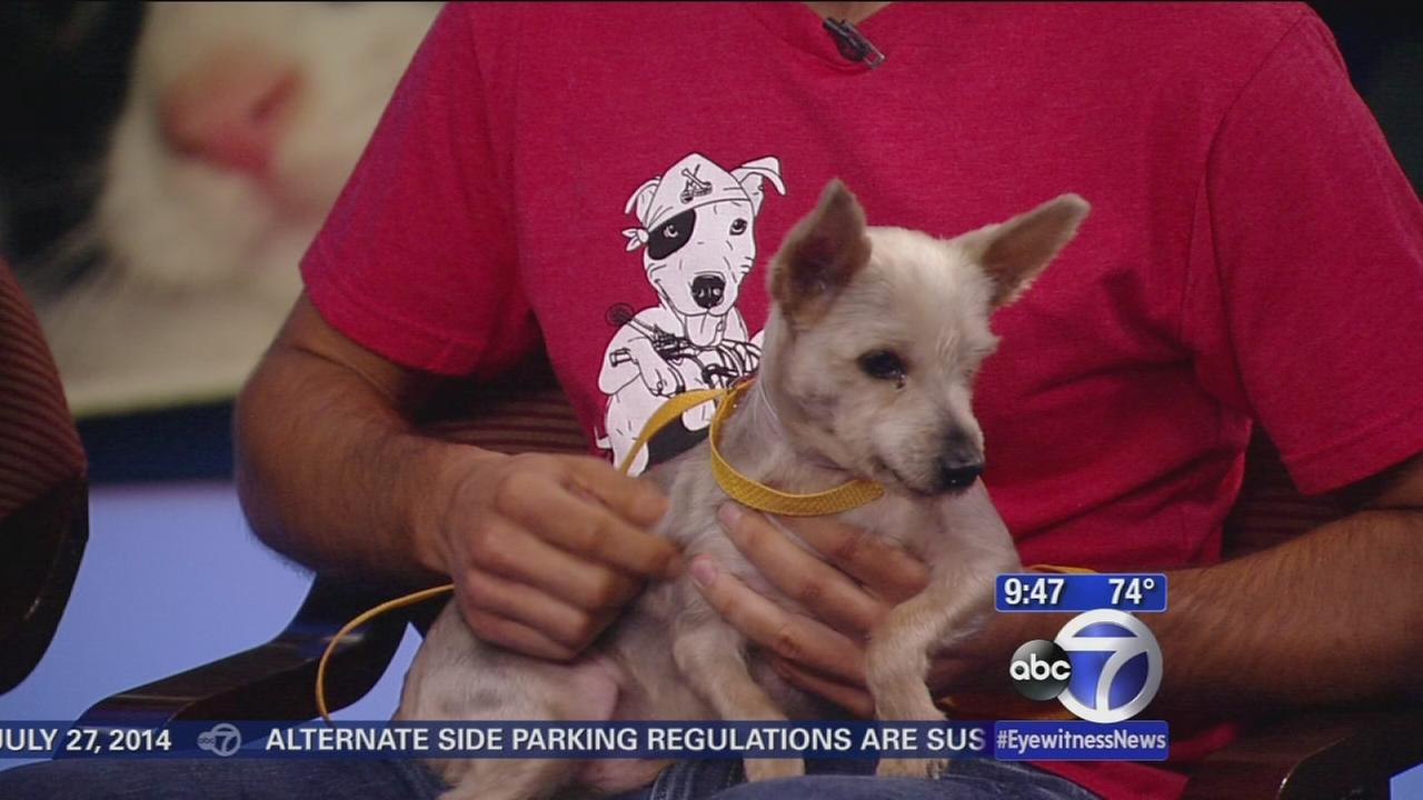 Rock and Rawhide seeking homes for pets in shelters