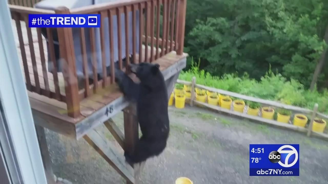 The Trend: Bear climbs up deck