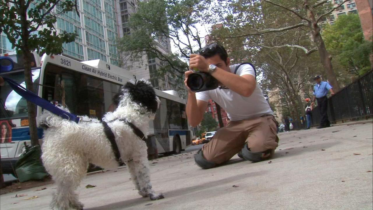 Catch up with the dogist