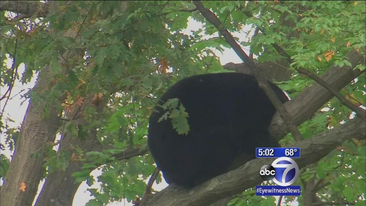 Bear scare near school in NJ
