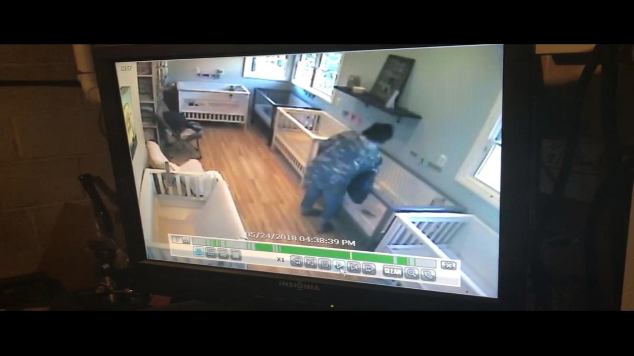Surveillance video of puppy theft on Long Island