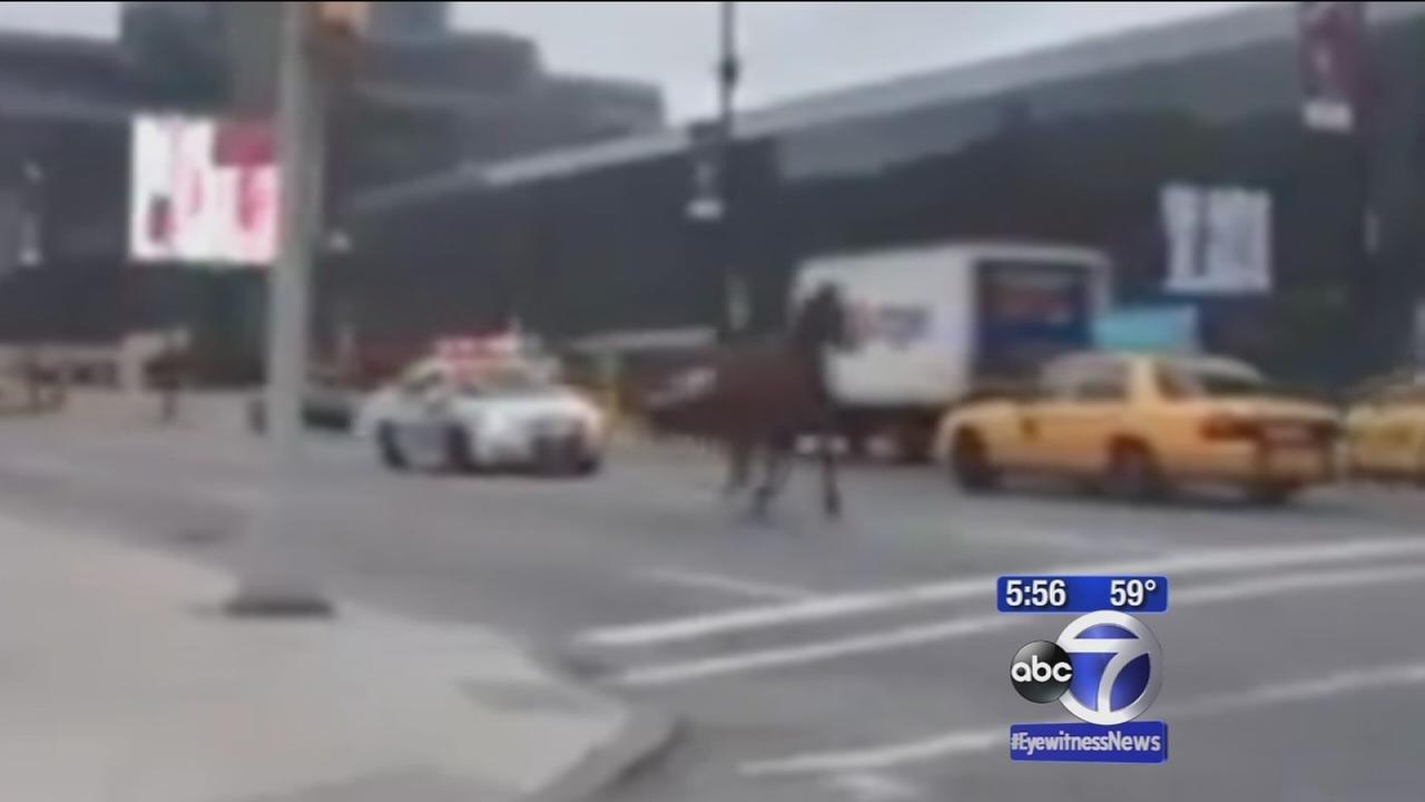 Horse gets loose, runs through streets of Manhattan