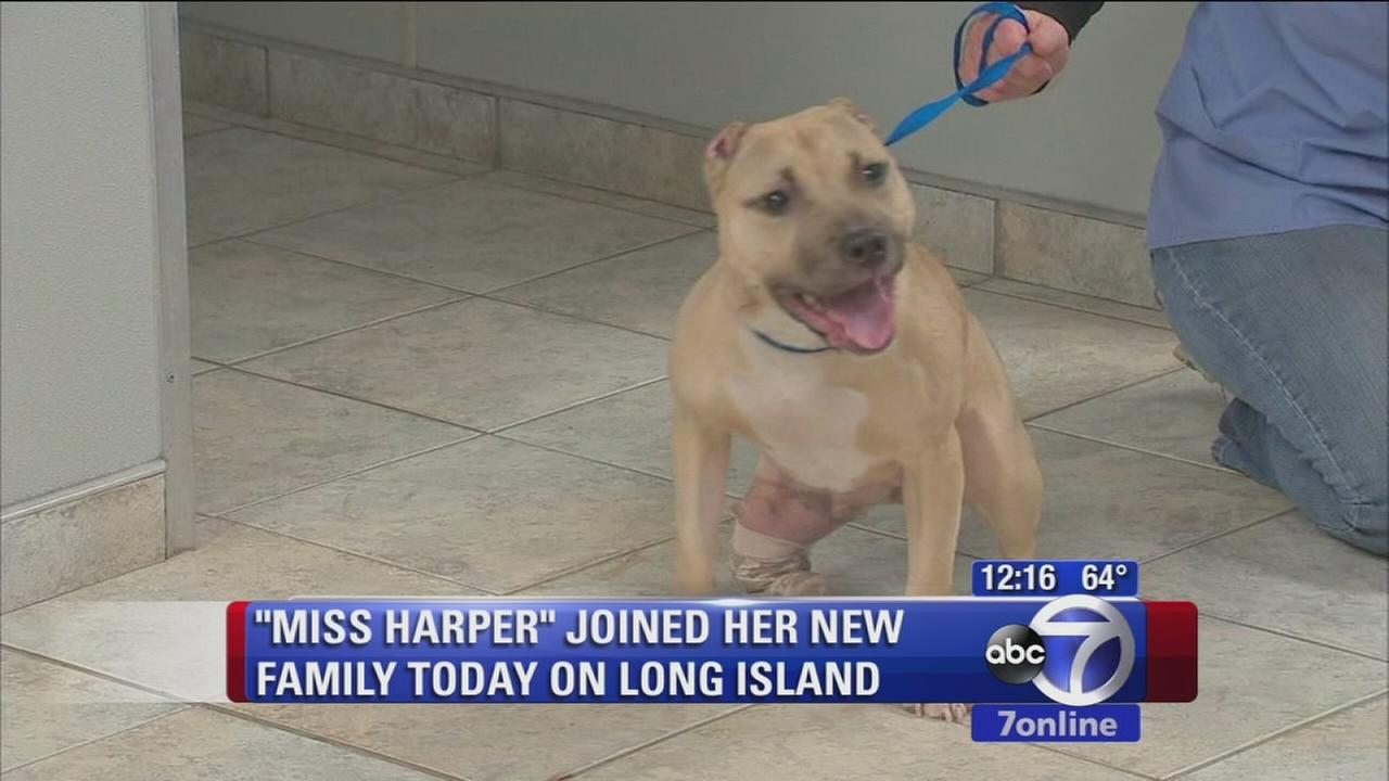 Miss Harper the dog gets new home