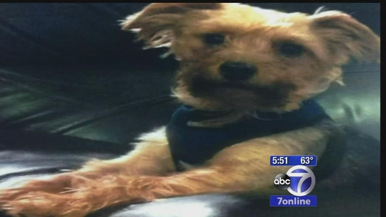 Yorkshire terrier inside car stolen in Queens