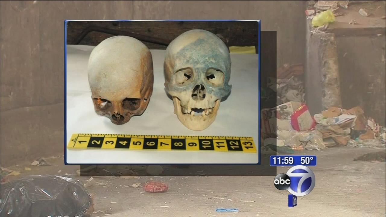 Skulls found in Stamford dump