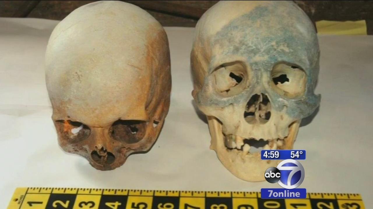 Human skulls found in Stamford