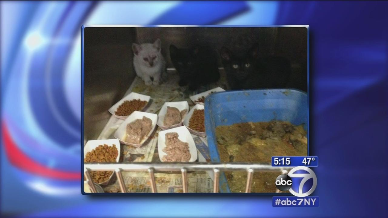 Animal shelter raided in New Jersey