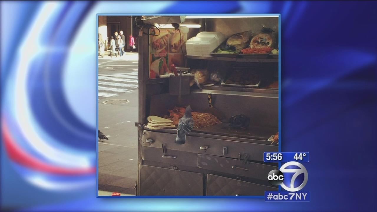 Pigeon spotted snacking at NYC food cart