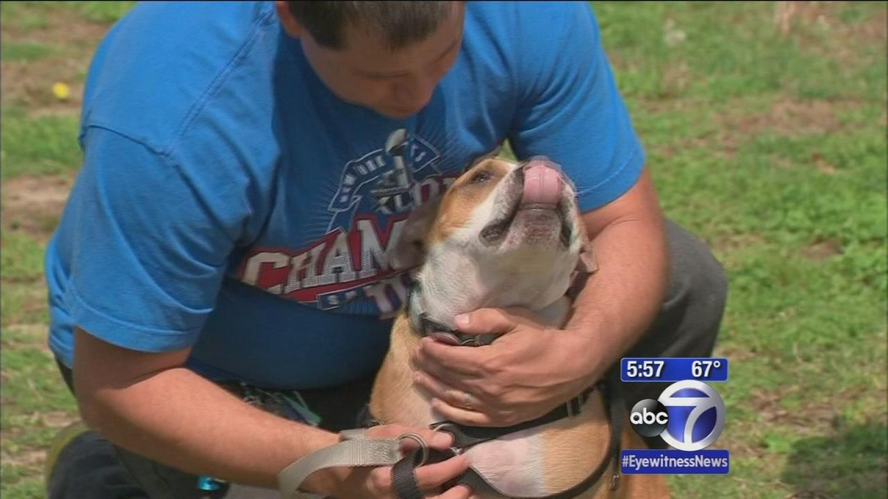 Dog lost during Superstorm Sandy reunited with owners
