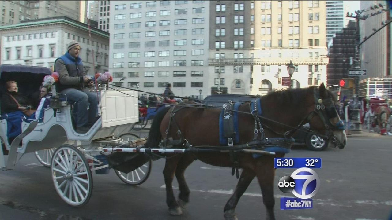 Both sides in horse carriage debate make their voices heard