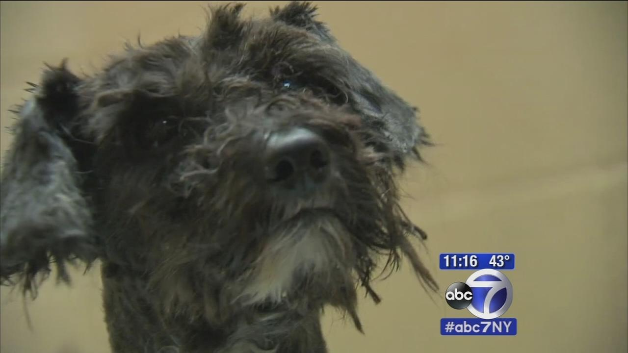 Four dogs rescued from horrible conditions in Paterson