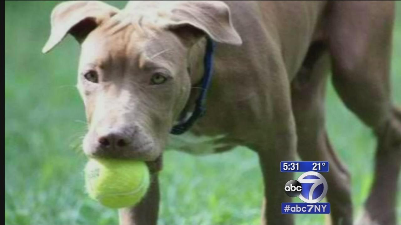 LI family devastated after pet dog killed