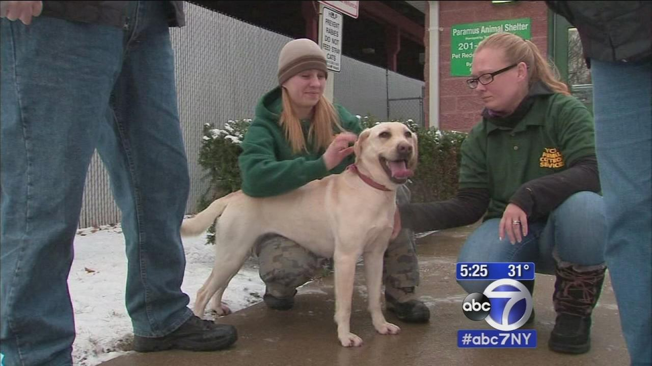 How to protect your pets in cold weather
