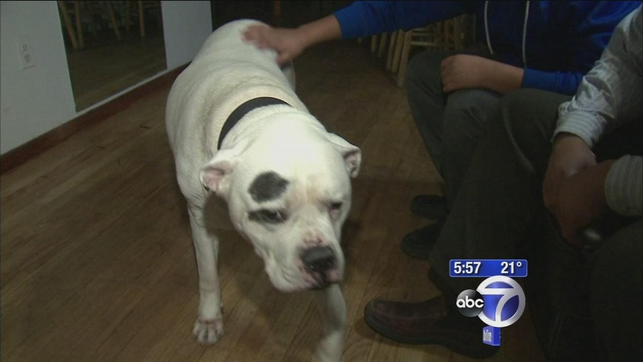 Bronx dog finds home after 3 years in shelter