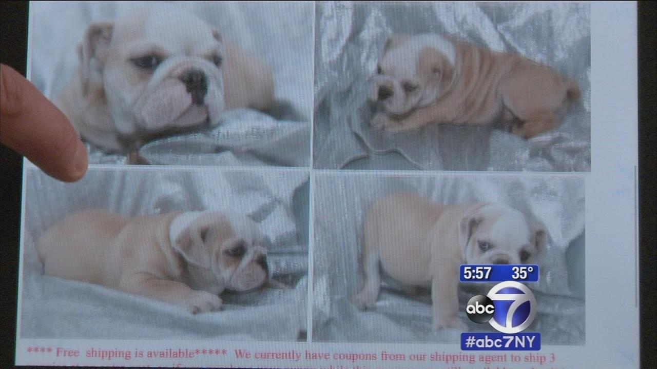 7 On Your Side investigates a puppy scam that is leaving buyers heartbroken