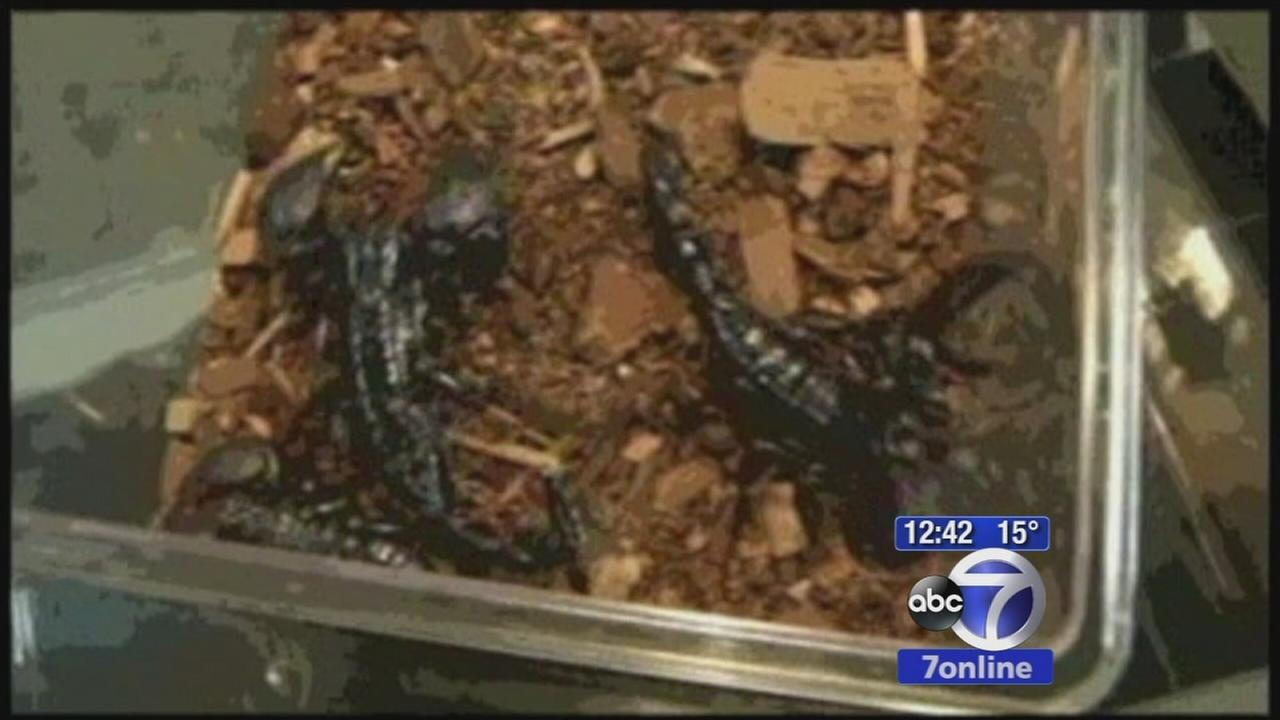 021615-wabc-scorpion-on-plane-vid