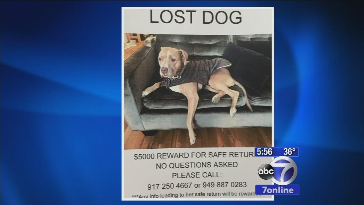 Dog left in care of dog walker goes missing