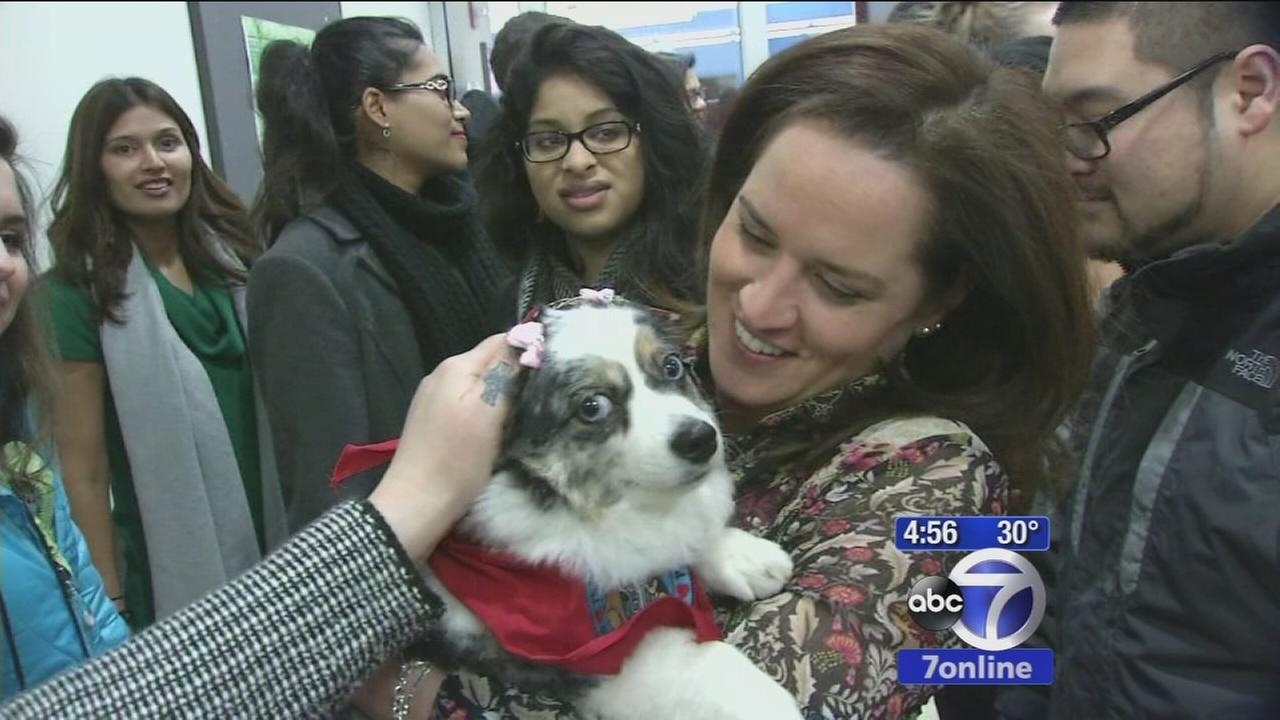 Therapy dogs calming stressed-out students
