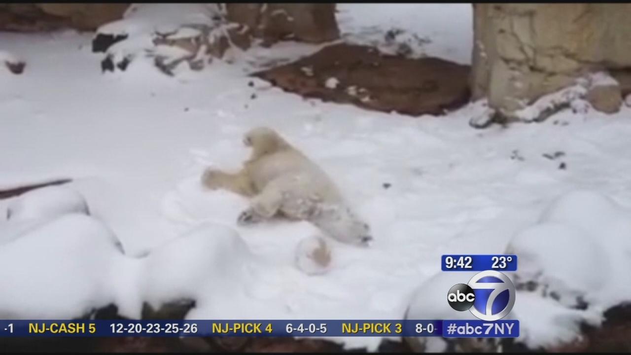 Dog Slams Cat Into Snow