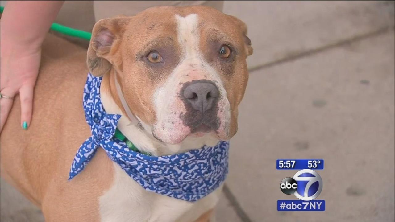 New app makes helps find pets homes