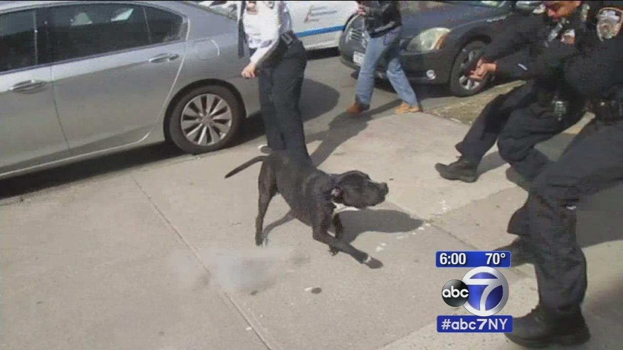 Police open fire at dog