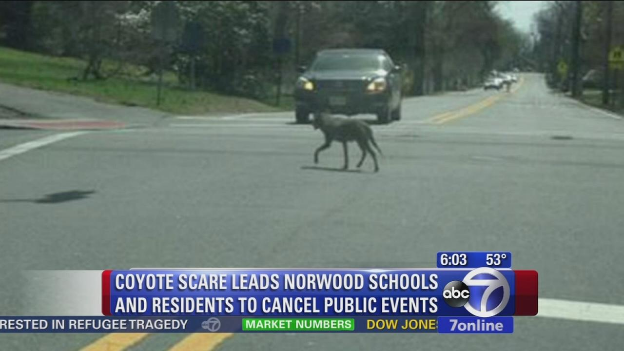 Coyote curfew called for one New Jersey neighborhood