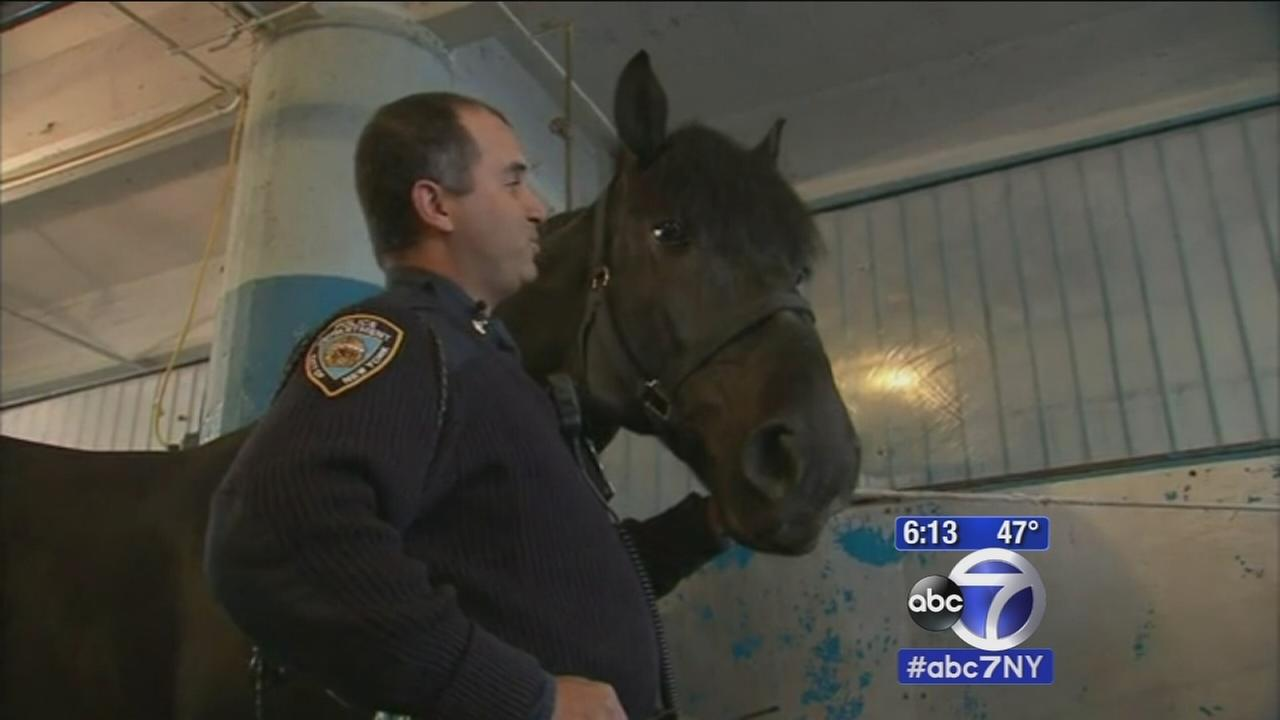 NYPD horse recovering from pit bull attack