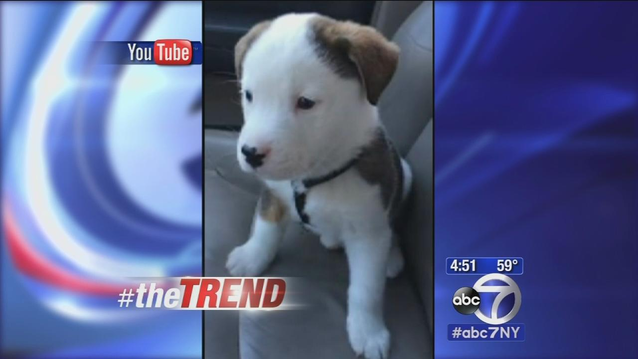The Trend: Dog has hiccups