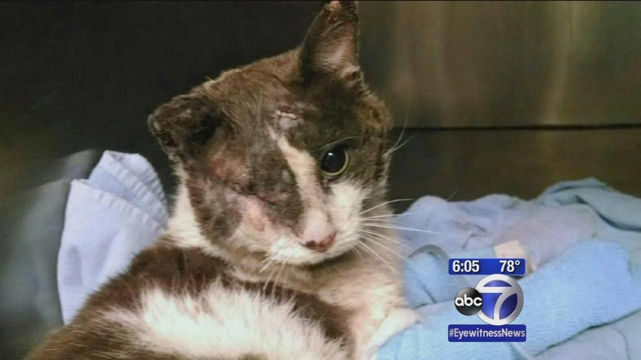 Man Charged With Animal Abuse After Cat Beaten