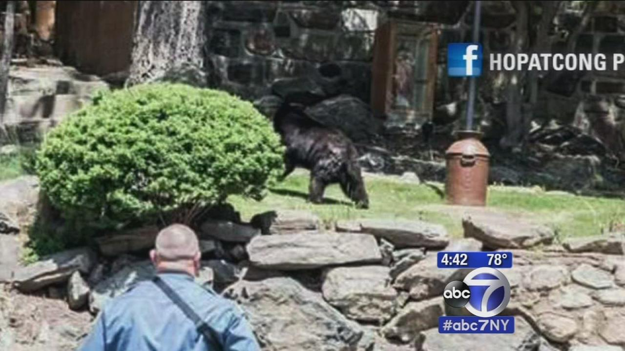 Bear sticks head in window in New Jersey