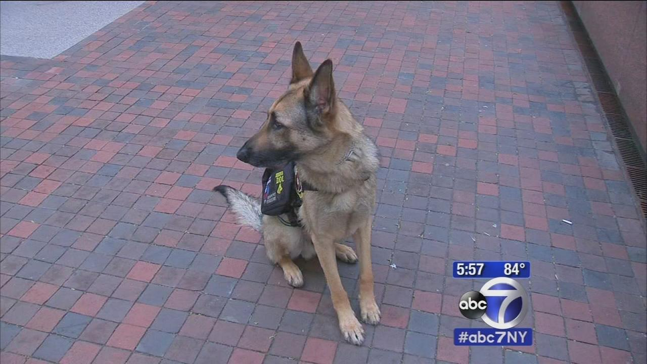 Senator Schumer pushes to get service dogs back home