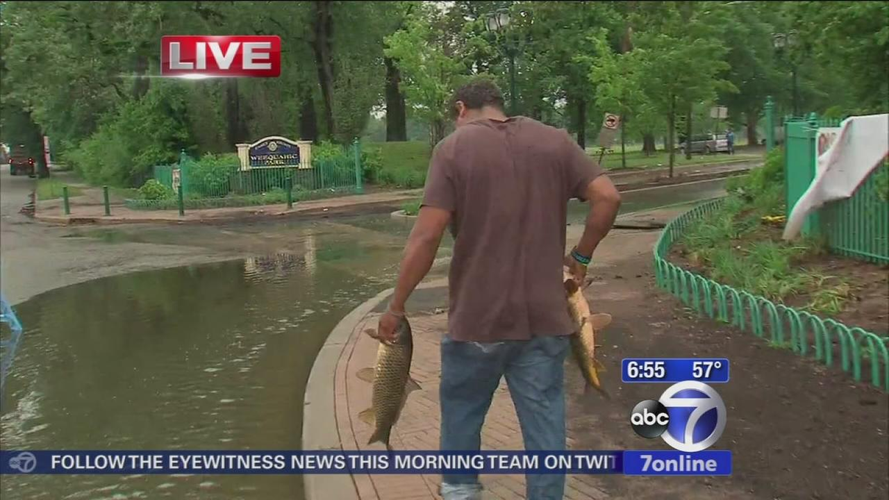 Fish rescued in Newark