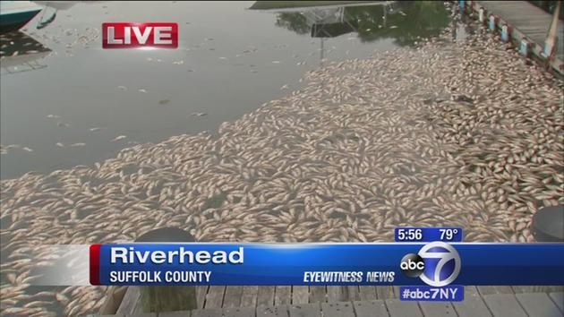 More dead fish wash up to shoreline in Riverhead