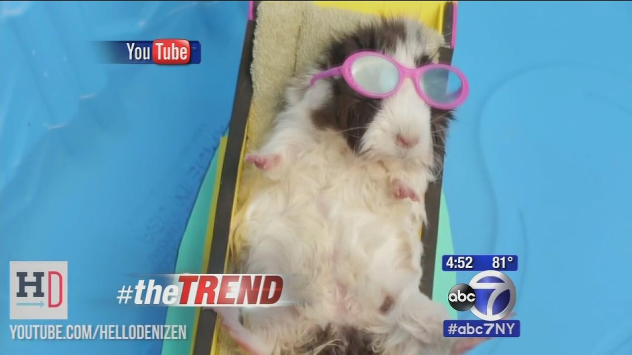 The Trend: Liz, Lee and David play name the animal