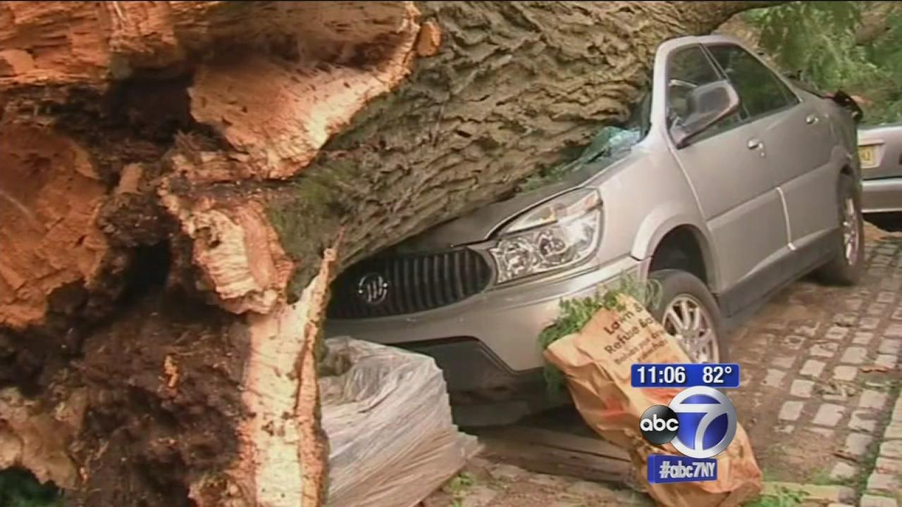 Giant tree comes crashing down on two cars in Summit