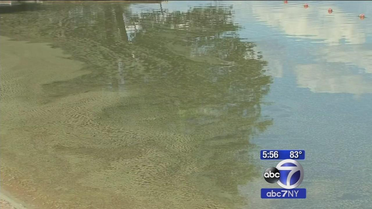 Algae outbreak forces closure of five beaches in Putnam County