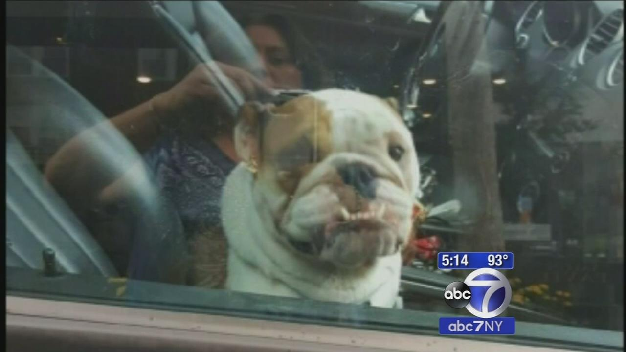 Police rescue distressed dog locked in hot car; owner to be charged with animal cruelty