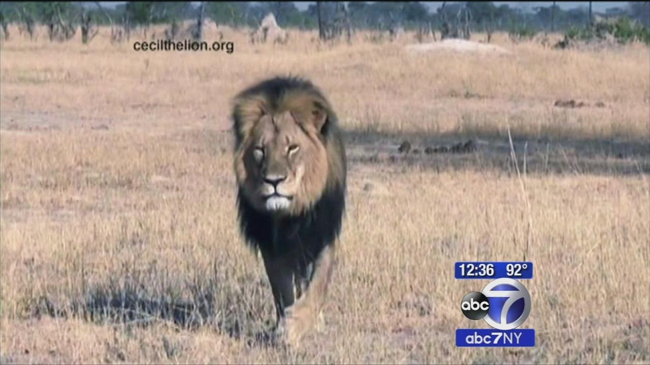 US dentist under fire after lions death