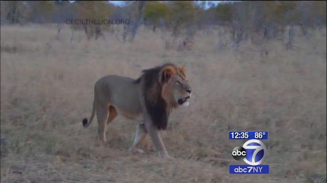 Zimbabwe officials seek to extradite U.S dentist who shot lion