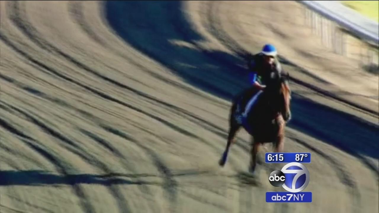 Want to see American Pharoah at Monmouth Park? Heres what you need to know