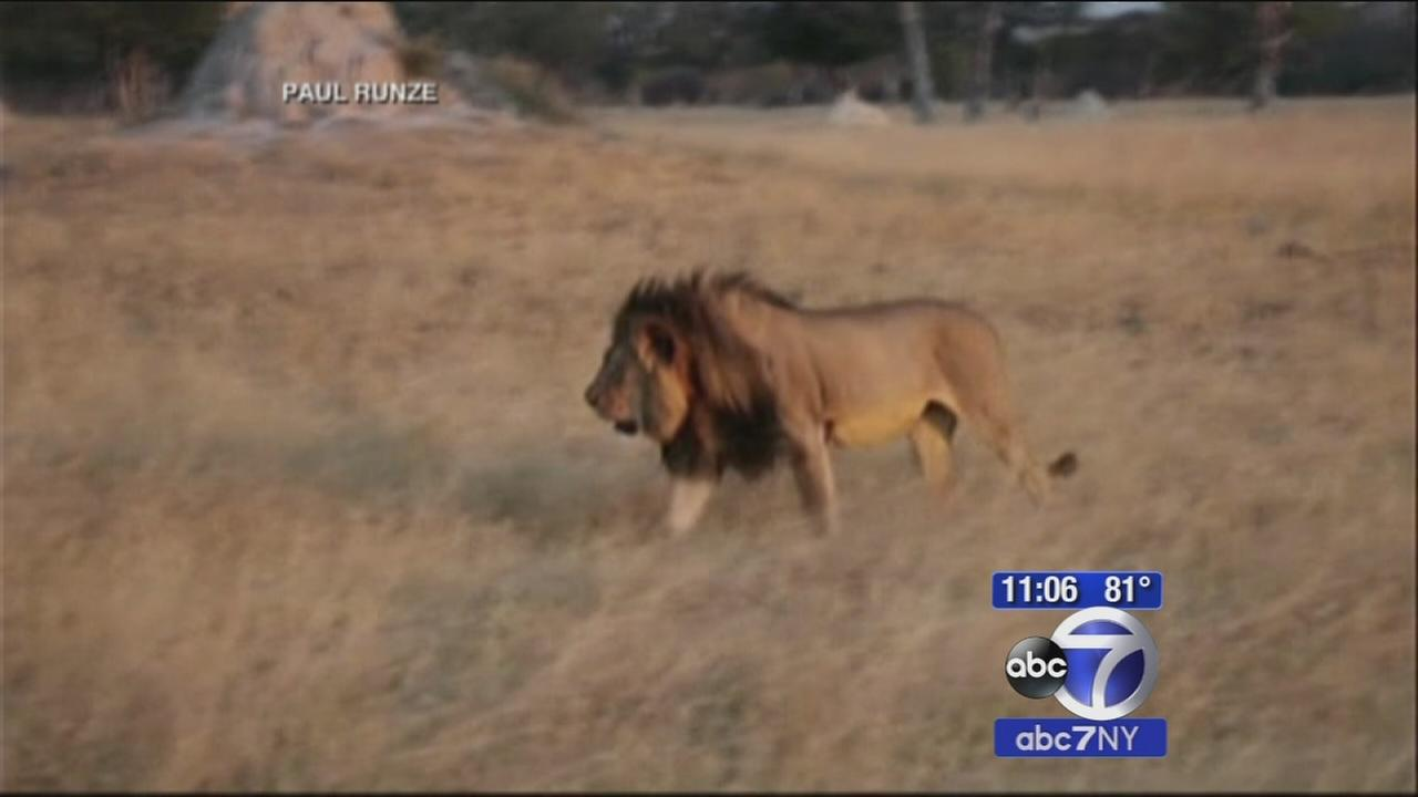 Conflicting reports abouth fate of Cecil the Lions companion