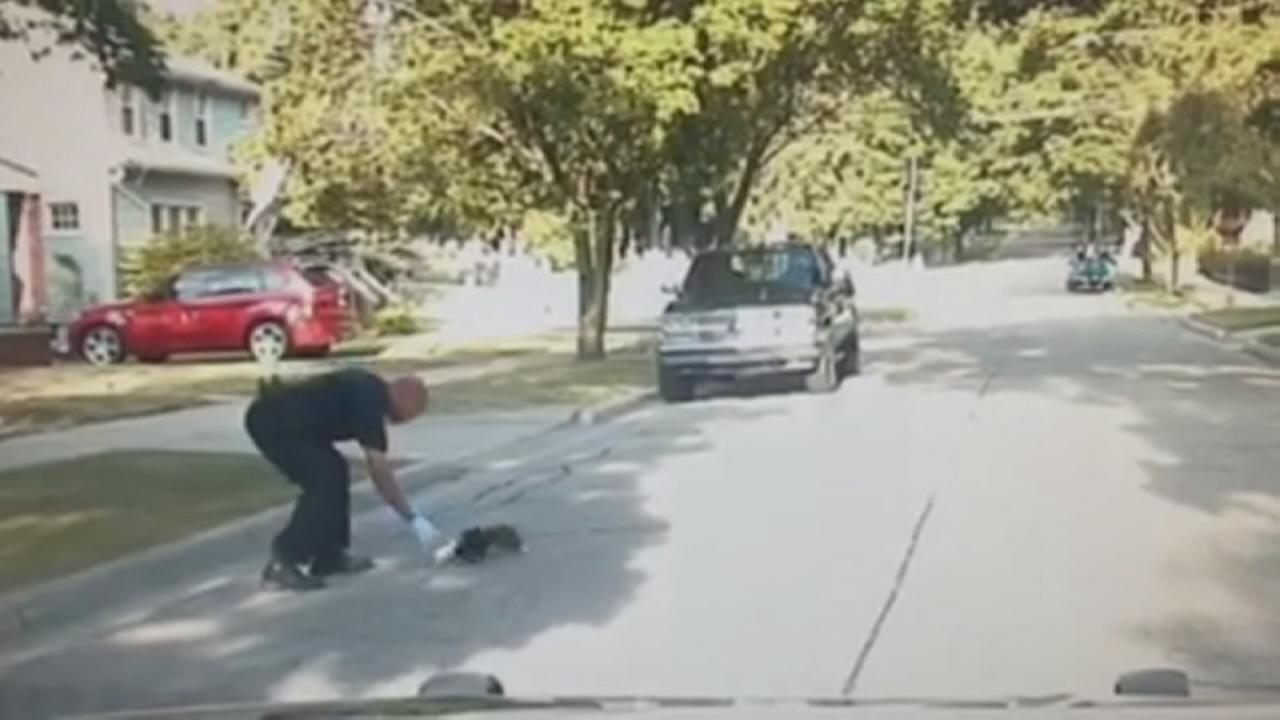 Officer helps stuck skunk