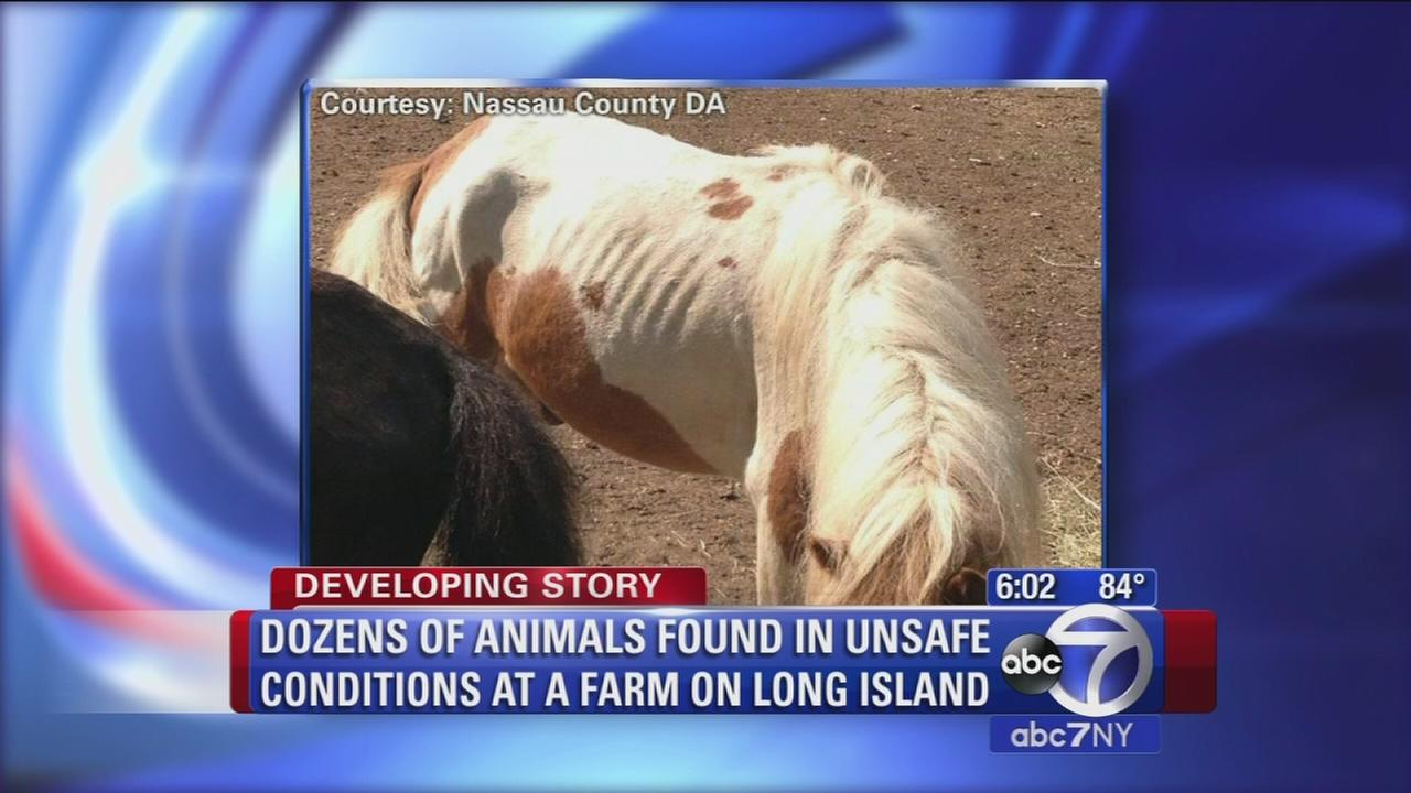 Dozens of animals found in unsafe conditions at a farm on Long Island