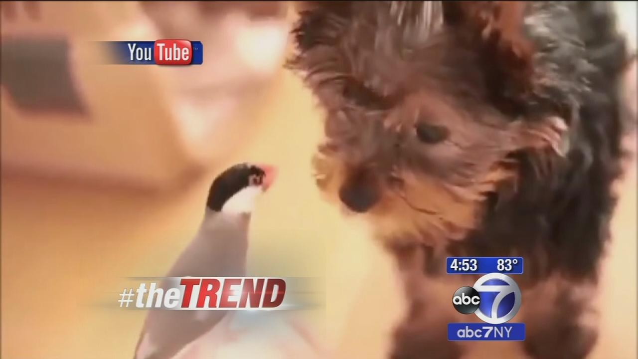 The Trend: Friendship blooms between a puppy and a bird