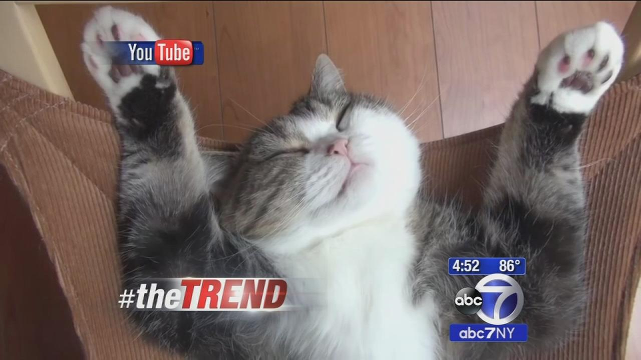 The Trend: Cat knows how to hang out and relax!