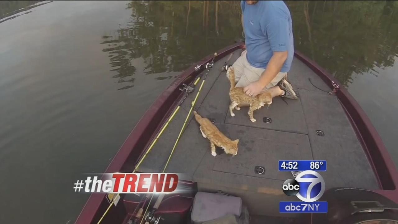The Trend: Where did these cats come from?!