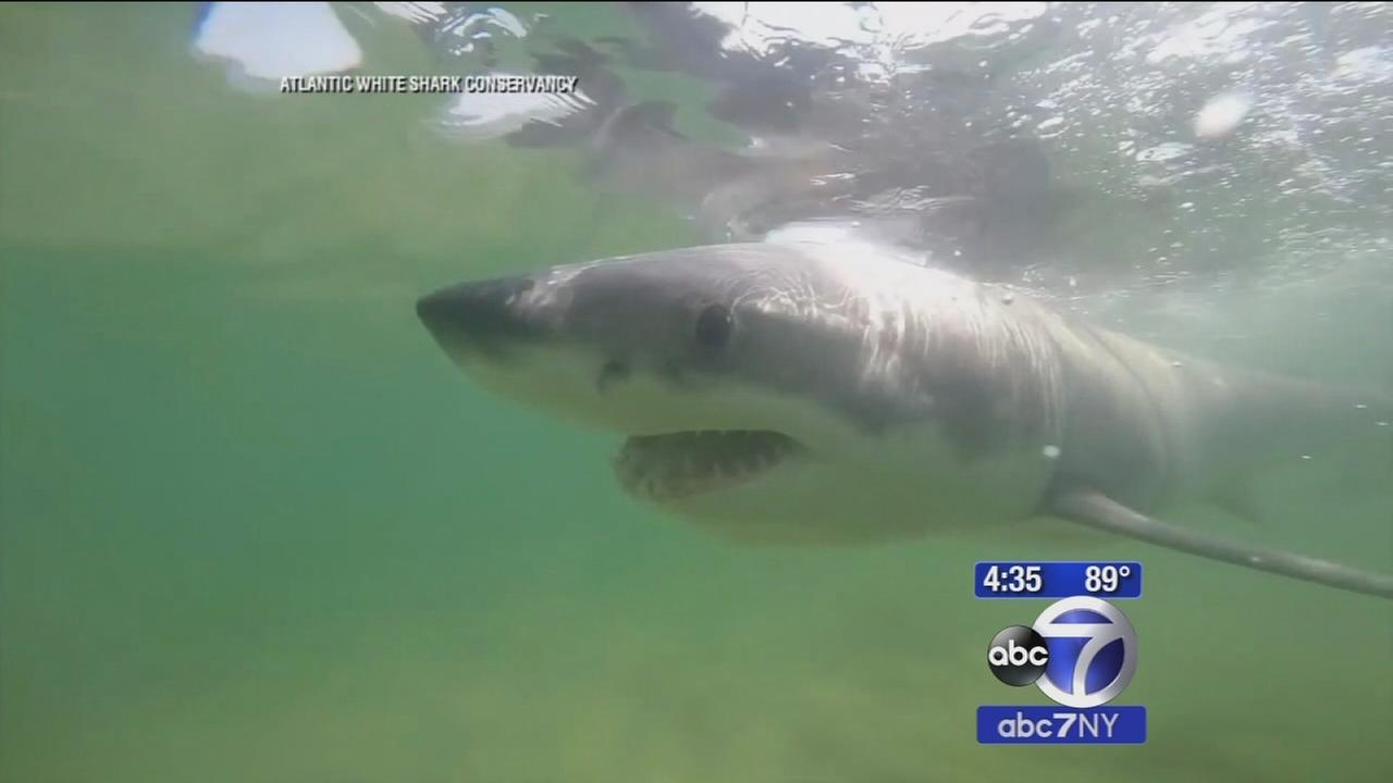 Labor Day warning issued with increase in shark sighting off Cape Cod