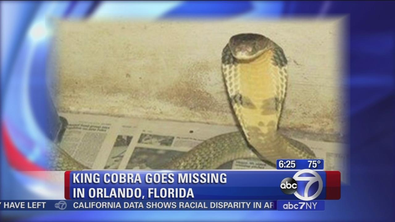 Cobra on the loose!